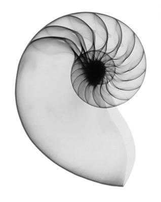 x ray art. nautilus X-ray art